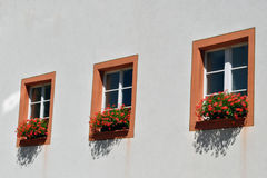 Windows and Geraniums Stock Photo