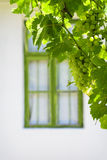 Windows and grapevine Stock Photography