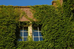 Windows with green. In Amsterdam, Holland Stock Image