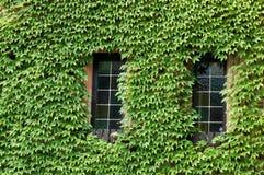 Windows ha coperto di verde Fotografie Stock