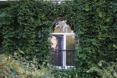 Windows Hiedra-cubierto en una tarde del verano en el distrito viejo de St Petersburg imagen de archivo libre de regalías