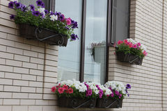 Windows home, decorated in a petunia flower boxes Stock Image