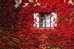 Windows of a house at autumn Stock Image