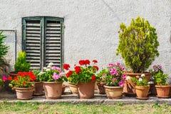 Windows i drzwi w starym domu dekorowaliśmy z kwiatem Obrazy Royalty Free