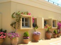 Windows i flowerpots Obrazy Stock