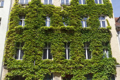 Free Windows In A Green Wall Royalty Free Stock Photos - 95984278