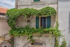 Windows inramade vid murgrönan Royaltyfri Fotografi