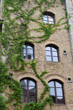 Windows with ivy Stock Photos
