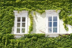 Windows with ivy in moravian town Mikulov, Czech republic Stock Photos