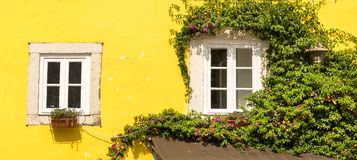 Windows with ivy Royalty Free Stock Images