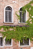 Windows with ivy Royalty Free Stock Image