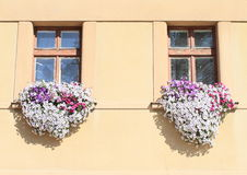 Windows with lila and white flowers. White and lila flowers in front of wooden windows Royalty Free Stock Images