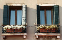 Windows mit Blumen stockfoto