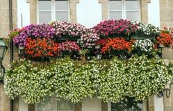 Windows mit flowersall stockbild