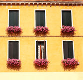 Windows mit Pelargonie Lizenzfreie Stockfotos