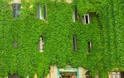 Windows na construção velha em Roma Imagens de Stock Royalty Free