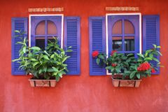 Windows och blomma arkivfoto