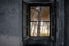 Windows och gräsplan Arkivbild