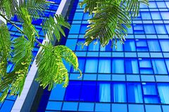 Free Windows Of Skyscrapers And Acacia Leaves In Tel Aviv, Israel Royalty Free Stock Photo - 162771595