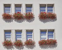 Windows of an office building, Munchen, Germany. Windows and flowers of an office building, Munchen, Germany Royalty Free Stock Photo