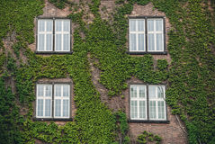 Windows in an old country house Stock Image