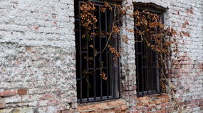 Windows in an old house.  Royalty Free Stock Photo