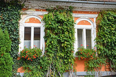 Windows of an old house with flowers Stock Photos