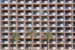 Windows and palm tree Royalty Free Stock Images