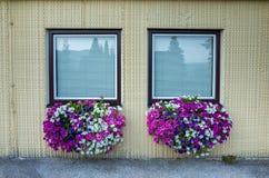 Windows and petunias Royalty Free Stock Photo