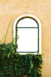 Windows with plant. Windows in Italian style with plant Royalty Free Stock Image