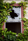 Windows quebrado em uma construção abandonada coberto de vegetação com a hera Fotografia de Stock