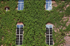 Windows of the royal palace in Stockholm Stock Photography