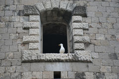 Windows in the stone walls of the fortress Mamula. Stock Photos