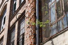Windows tegelstenvägg Royaltyfri Foto