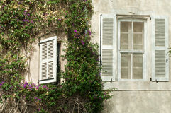 Windows and wall with ivy Stock Images