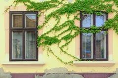 Windows Royalty Free Stock Photography