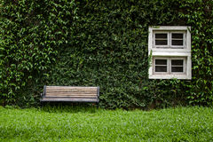 Windows and walls are covered with ivy look elegant and classic Stock Photo