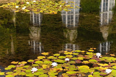 Windows between water lily. In botanic garden royalty free stock images