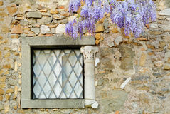 Windows with wisteria. On the Appia Antica Street in Rome Royalty Free Stock Photos