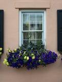 Windows y los adornos de las exhibiciones de los plantadores de las cajas de ventana aumentan arquitectura Fotografía de archivo