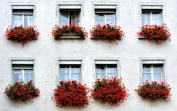 Windows z kwiatami Zdjęcie Royalty Free