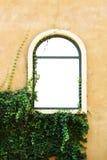 Windows z rośliną Obraz Royalty Free