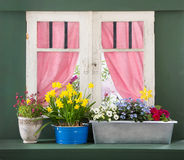 Windowsill with colorful flowers and window frame. Royalty Free Stock Images