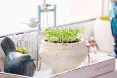 Windowsill greenety in pot Stock Photos