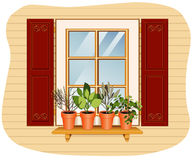 Windowsill Herb Garden. With (left to right) English Thyme, Sweet Basil, Garden Sage and Italian Oregano plants in flower pots on a wooden shelf, glass window Stock Photo