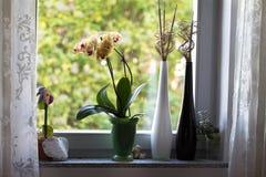 On the windowsill Stock Photography