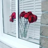 Windowsill róże Zdjęcie Stock