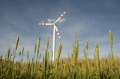 Windpower station in a cornfield Royalty Free Stock Image
