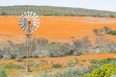 Windpump i matta av blommor på Skilpad Arkivfoton