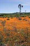 Windpumpe auf dem Gebiet der orange Blumen Lizenzfreie Stockfotos